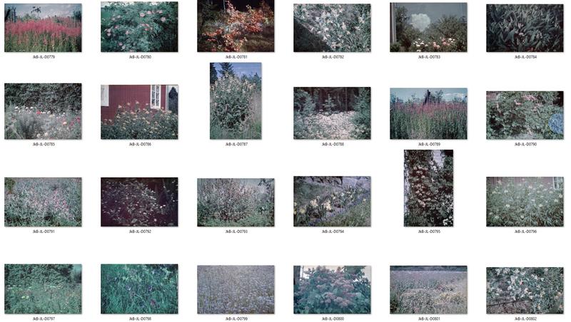 Blommor kontaktkarta 2.jpg