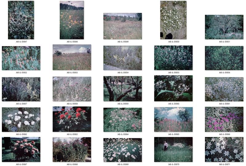 Blommor kontaktkarta 5.jpg
