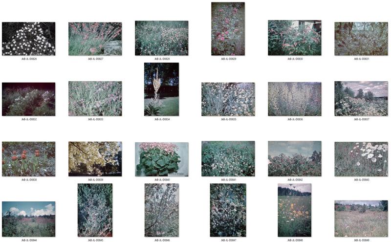 Blommor kontaktkarta 4.jpg